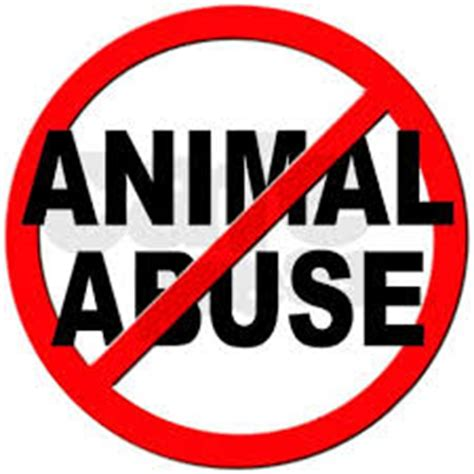 Argumentative essay about animal abuse